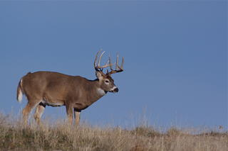 Recent reports show both antlered and antlerless harvest totals are rapidly declining across parts of the Midwest and Northeast.