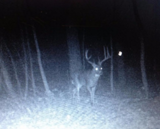 This massive whitetail was well-known among central-Wisconsin hunters. (Photo courtesy of Wade Wheaton)