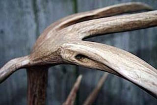 Can you name all of the known antler deformities? (Realtree photo)