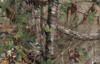 Realtree Xtra Green is a great camo pattern for those early season deer hunts.