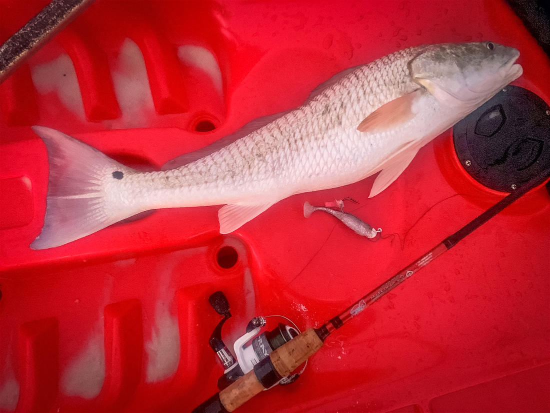 Chasing redfish on light tackle is just about the most fun you can have along the coast.