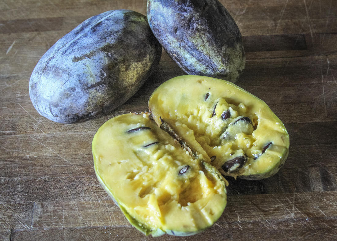 The pawpaw is America's largest native fruit.