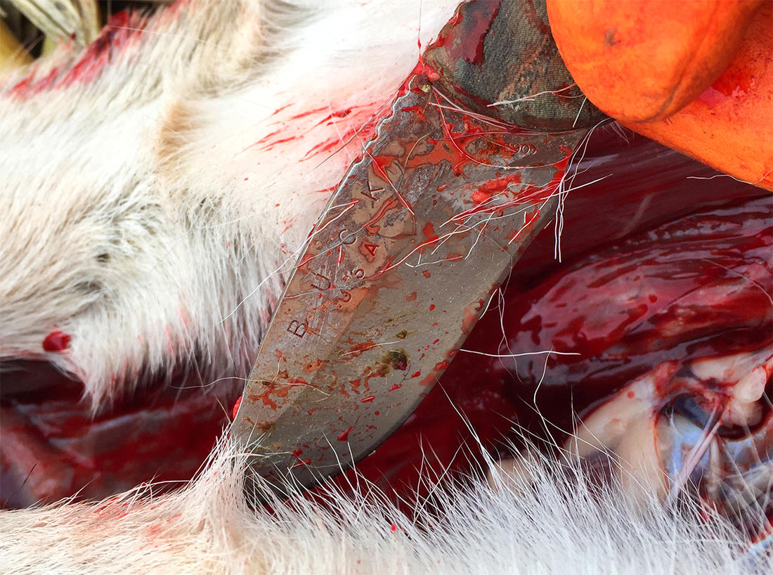 Do you know how to safely handle a deer carcass in the age of CWD? (Image by Bill Konway)