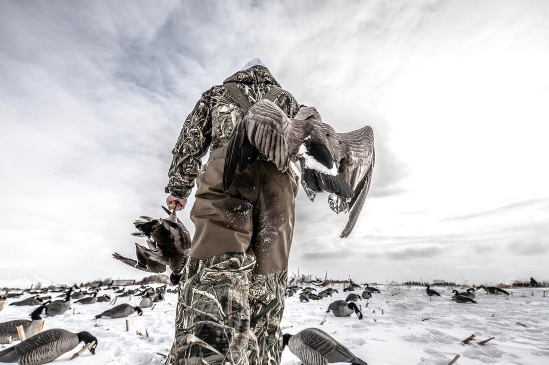 Late-season ducks and geese can be tough. So what? Get out there and enjoy your passion. Photo © Nick Costas