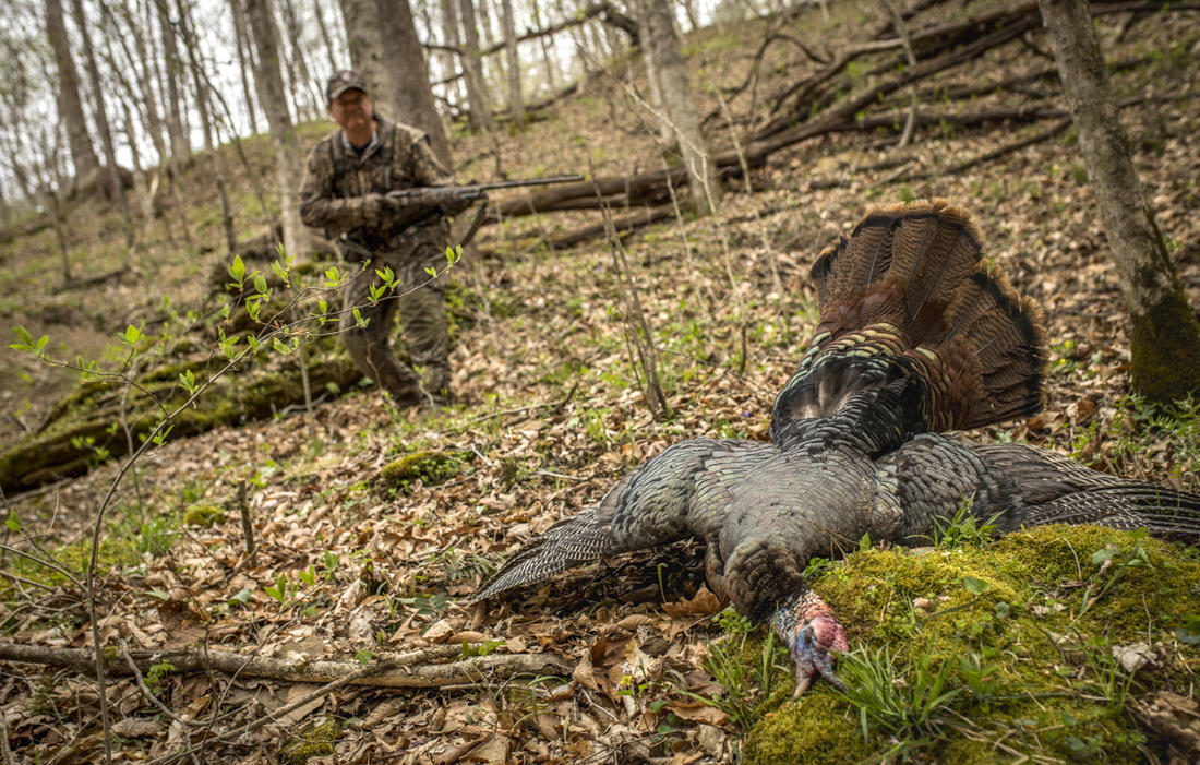 Calling turkeys is great fun but there are times you shouldn't. © Bill Konway photo