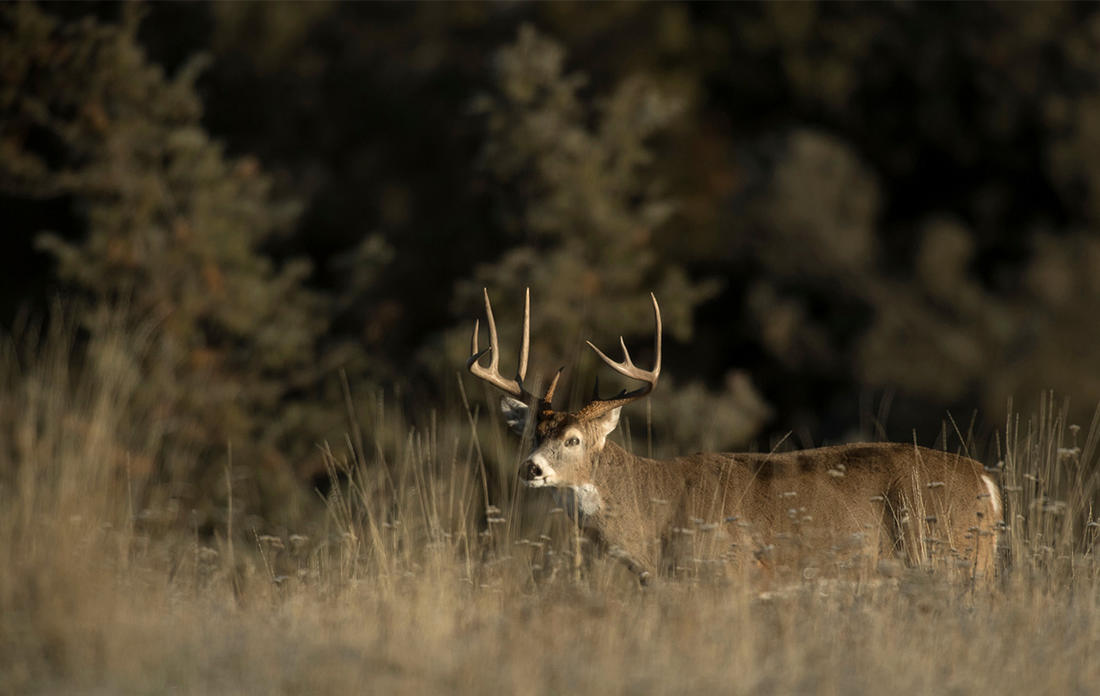 Does knowing every buck on the property take something away from the experience? (John Hafner image)