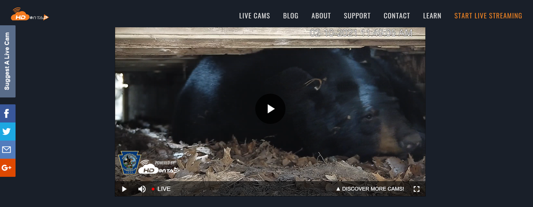Now you can enjoy 24/7 livestream access to a black bear den thanks to the Pennsylvania Game Commission.