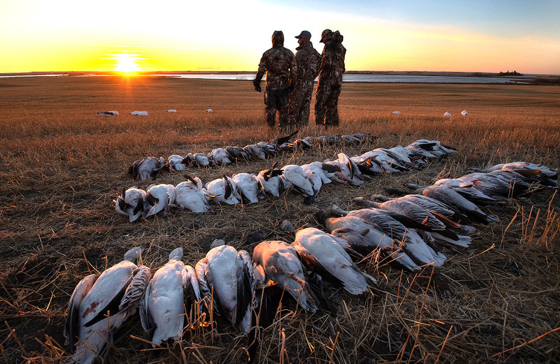 Booking with a poor guide can ruin a spring goose hunt. But with so many choices, finding the right outfit can be confusing. Photo by Forrest Carpenter