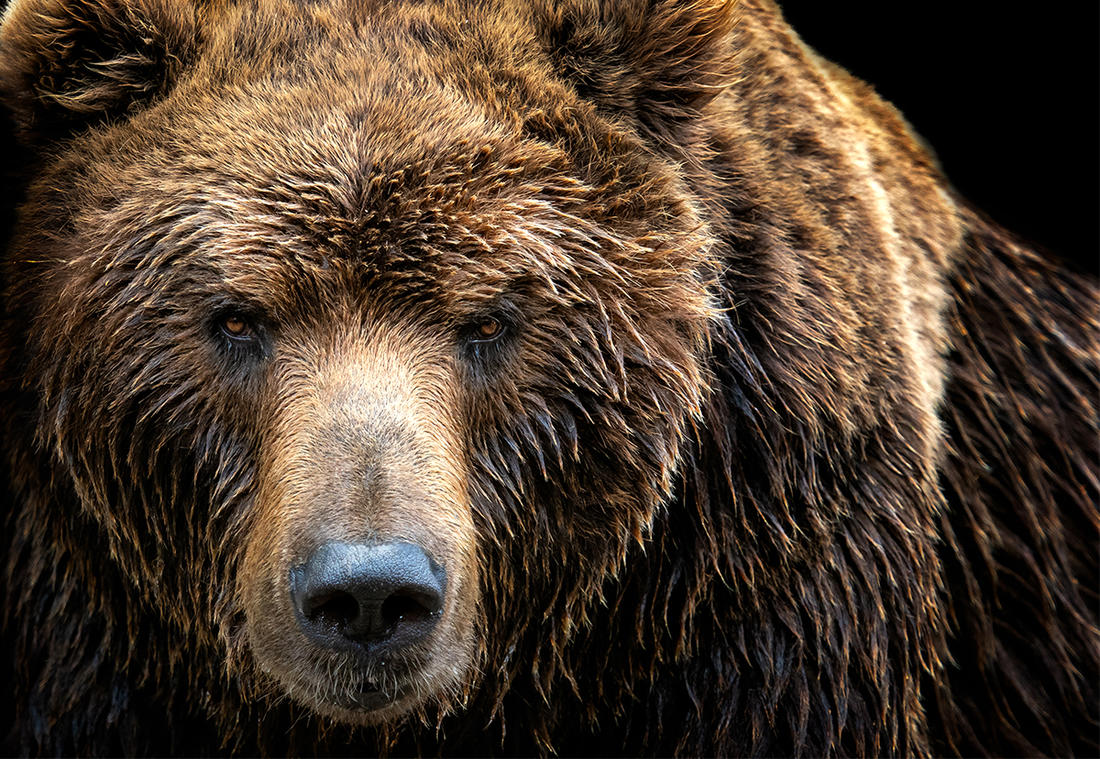 Allen Minish suffered several injuries after a bear attack that lasted approximately 10 seconds. Image by Lubos Chlubny / Shutterstock