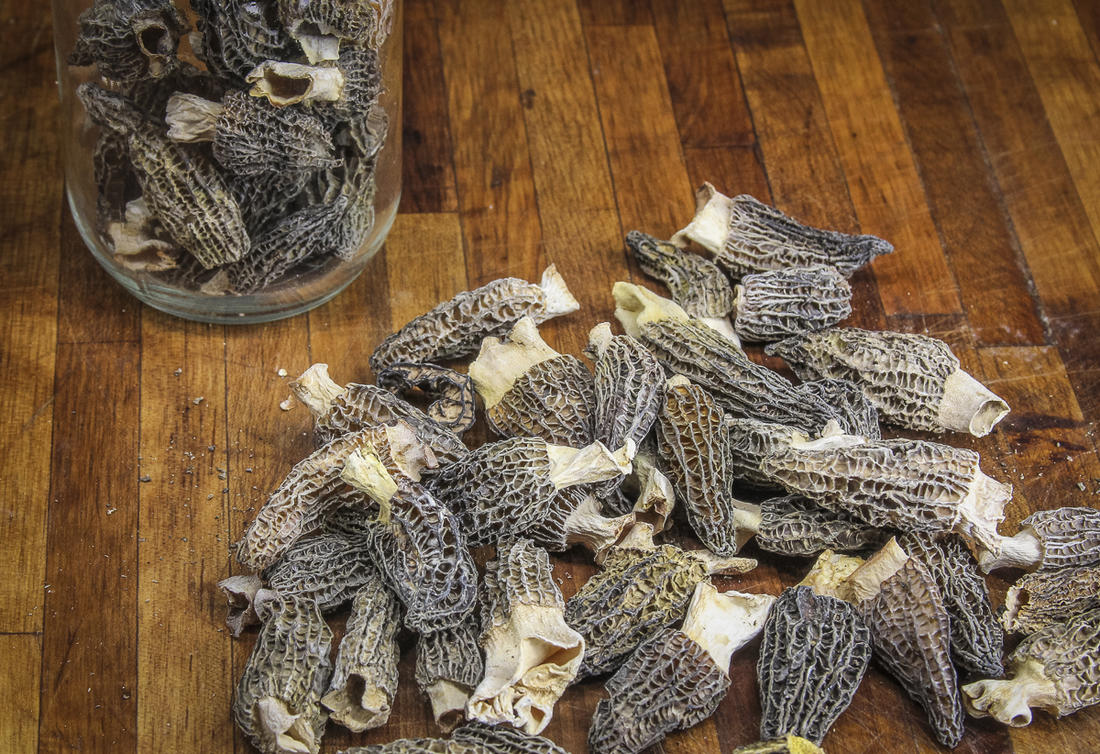 Drying is a great way to preserve excess morel mushrooms.