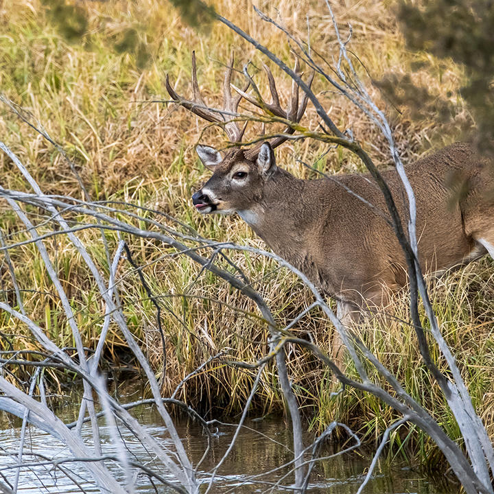 5 Best Stand Setups for Pre-Rut Bowhunting