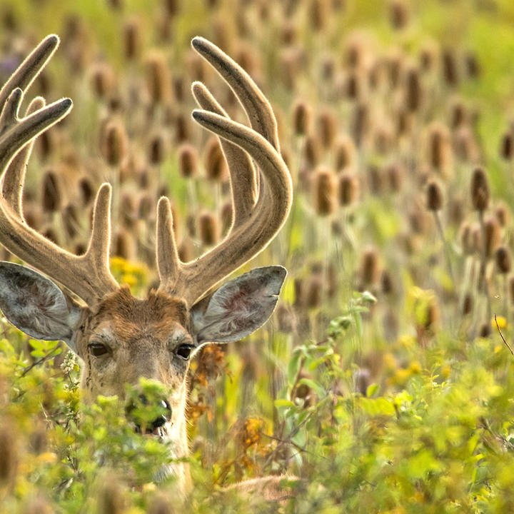 Answered: 5 Early Season Deer Hunting Questions