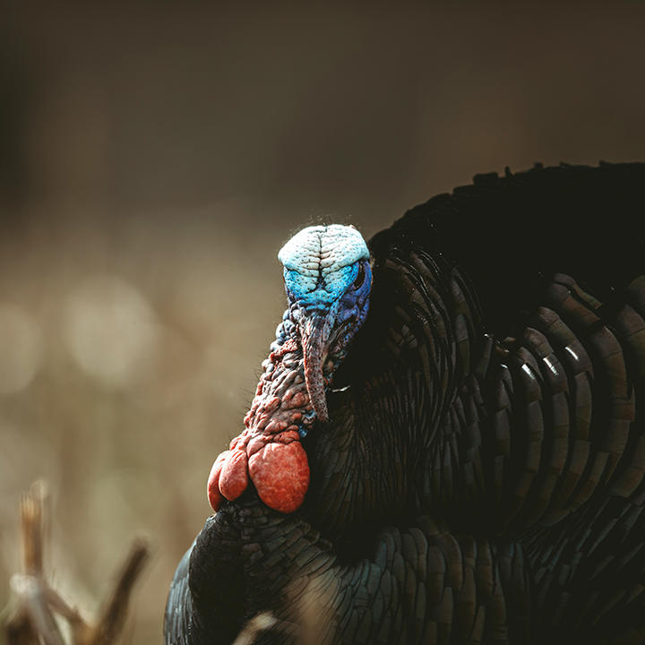 A Realtree roundup of turkey hunting news.