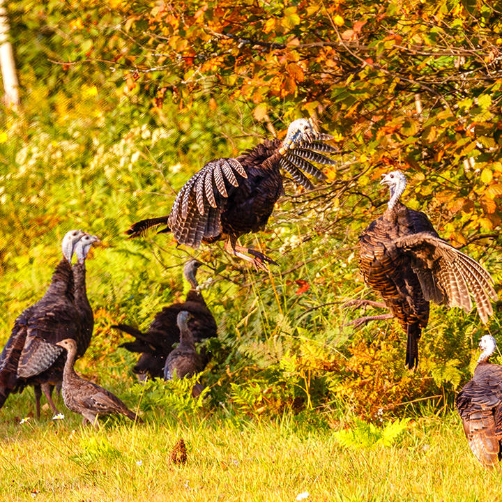 Some thoughts on staking out a spot for autumn flocks.