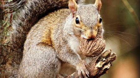 Squirrel Hunting Myths and Facts