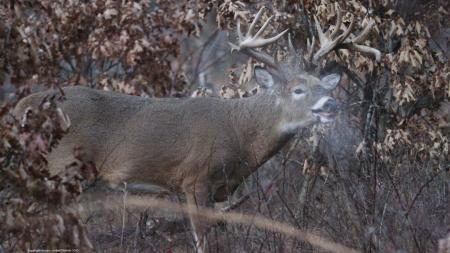 12 Reasons Why Your Venison Tastes Like Hell | Deer Hunting
