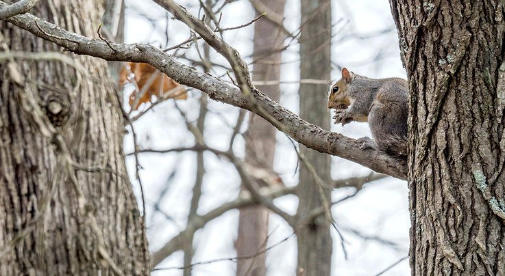 5 Reasons You Need to Hunt Winter Squirrels Preview Image