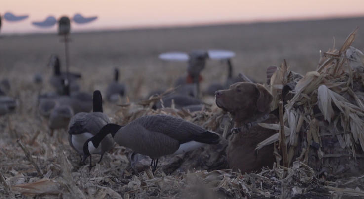 The X Waterfowl: Duck Hunting the Loaf Preview Image