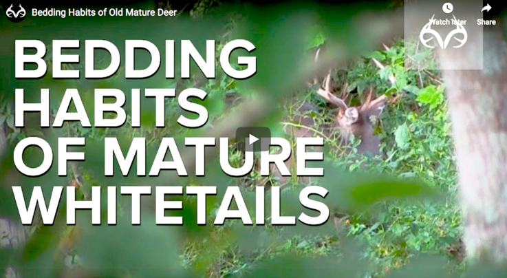 Bedding Habits of Old Mature Deer Preview Image