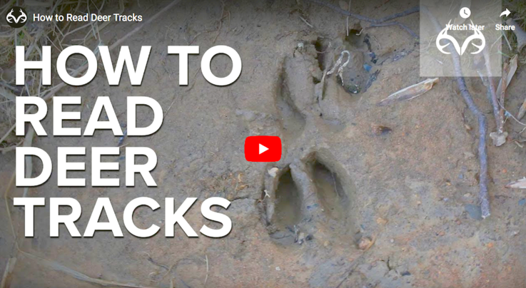 How to Read Whitetail Deer Tracks Preview Image