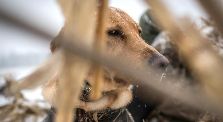 How to Hide Your Dog While Duck Hunting Preview Image