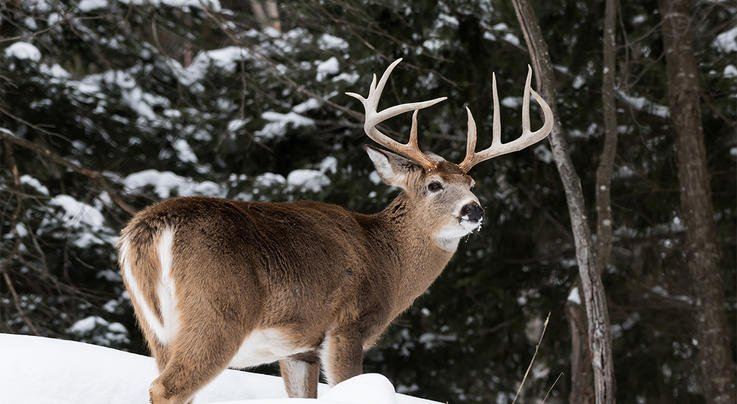 Hunting Giant Canadian Whitetails 101 Preview Image