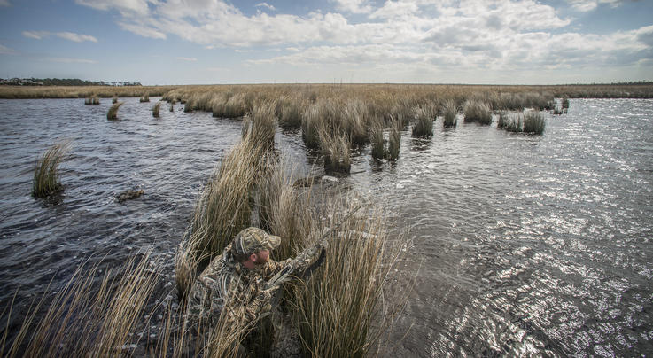 Delta Waterfowl Tracking Ringnecks Preview Image