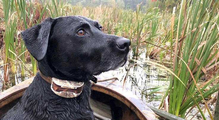 The Duck Blog Dog Reviews the Waterfowl Season Preview Image
