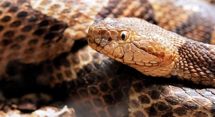 Woman Bitten by Copperhead While Doing Laundry Preview Image