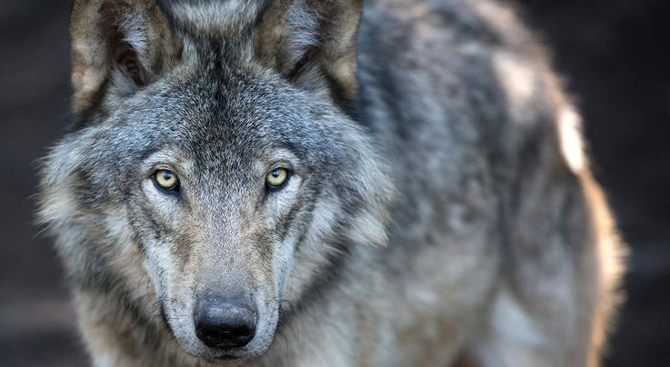 Changes Coming to Endangered Species Act Preview Image