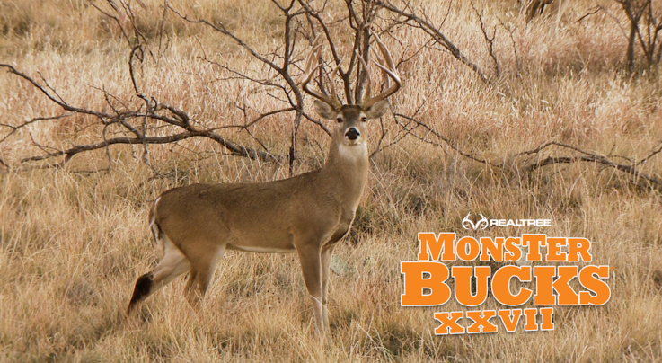 Monster Bucks 27: David Blanton Hunts Big Typical 12-Pointer in Texas Preview Image