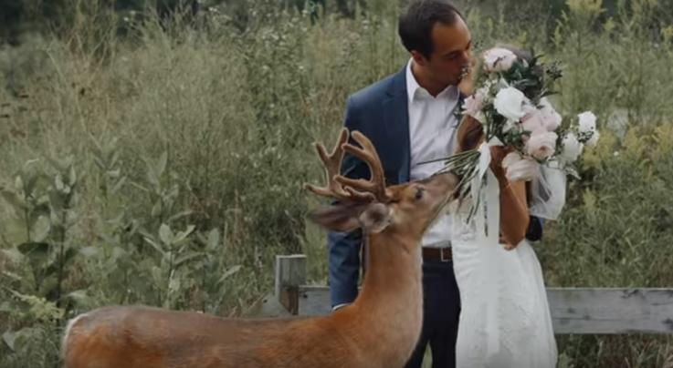 Wild Buck Photobombs Michigan Couple's Wedding Photos Preview Image