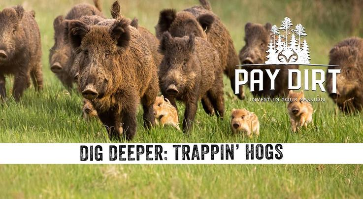 Pay Dirt: Advanced Hog Trapping Tips Preview Image