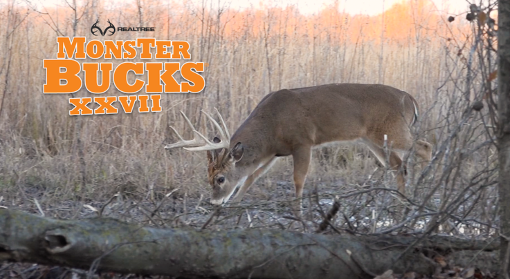 Monster Bucks 27: Matt Duff Arrows a Mississippi Swamp Deer Preview Image