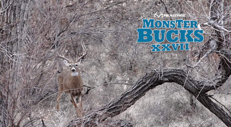 Monster Bucks 27: Brandon Adams Bowhunts an Oklahoma Stud Preview Image