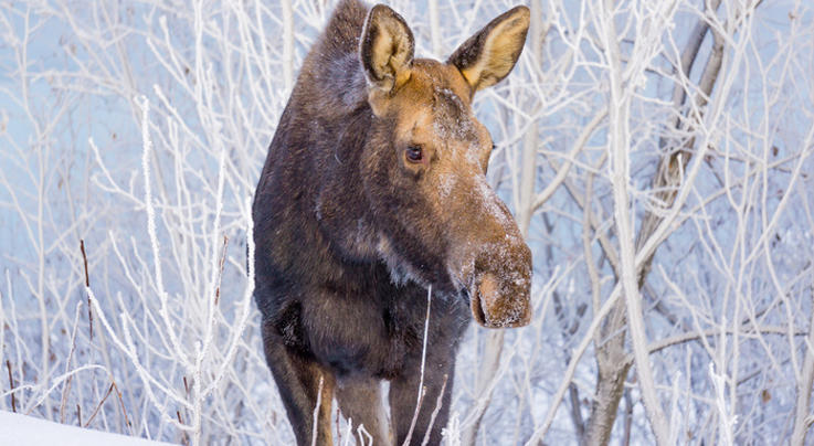 High School Students Butcher Moose in Classroom Preview Image
