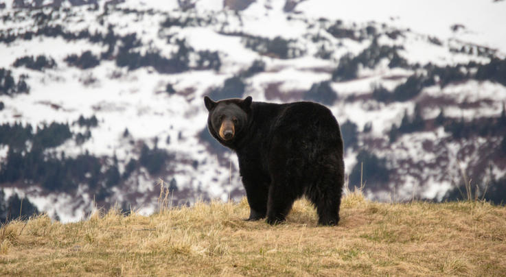 The Best Ammo for Black Bear Hunting Preview Image