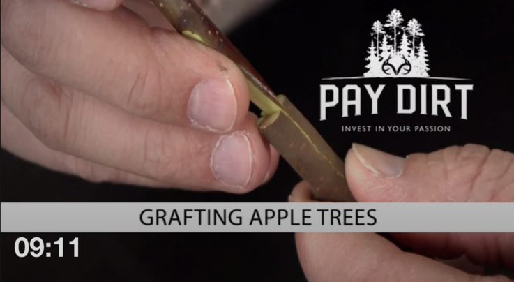 Pay Dirt: Graft Apple Trees to Make a Poor Man's Orchard Preview Image