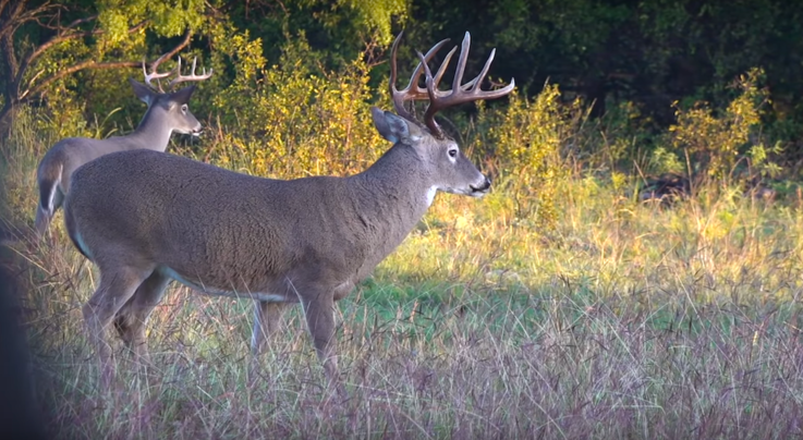 Whitetail TV: Two Big Pre-Rut Bucks Hit the Ground Preview Image