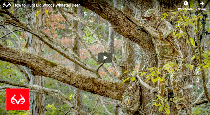 How to Hunt Big Woods Whitetail Deer Preview Image