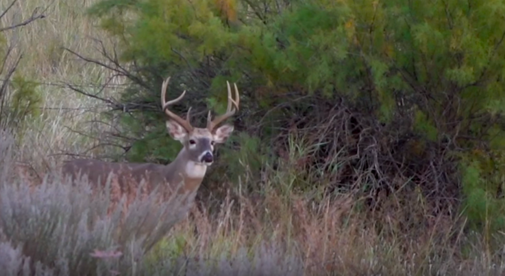 Whitetail TV: Release Aid Fail on Big Buck Preview Image