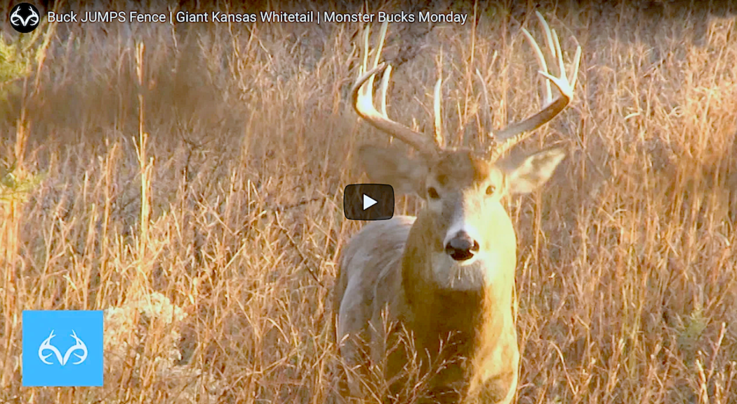 Monster Bucks: Kansas Stud Charges Grunt Call Preview Image