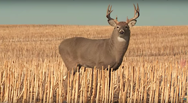 Monster Bucks: Mishap on an Open Country Buck Preview Image