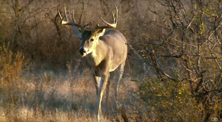 Monster Bucks: Michael Waddell Tags Wide-Racked Deer in Mexico Preview Image