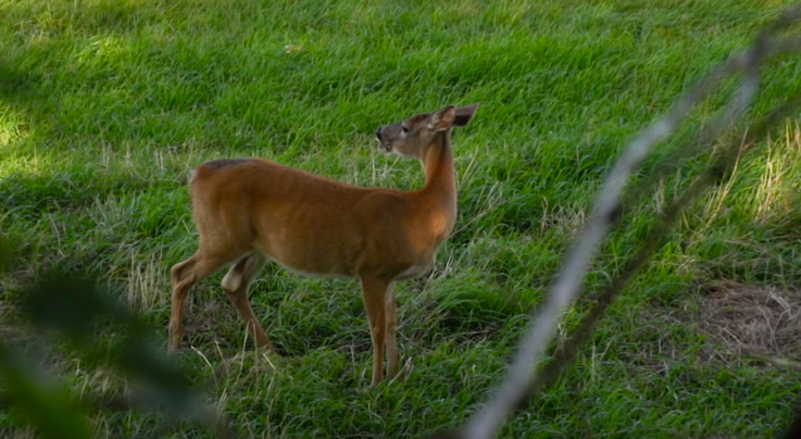 Whitetail TV: A Change of Pace Preview Image