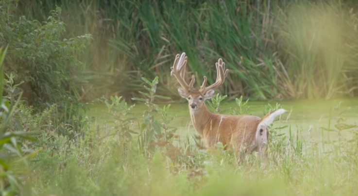 Whitetail TV: Blades and Flyers Confirmed Dead Preview Image