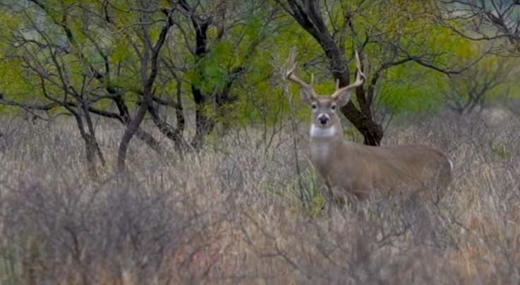 Whitetail TV: Rattling in Big Texas Bucks Preview Image