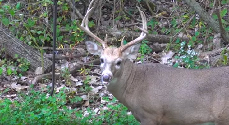 Whitetail TV: Six Pack Preview Image