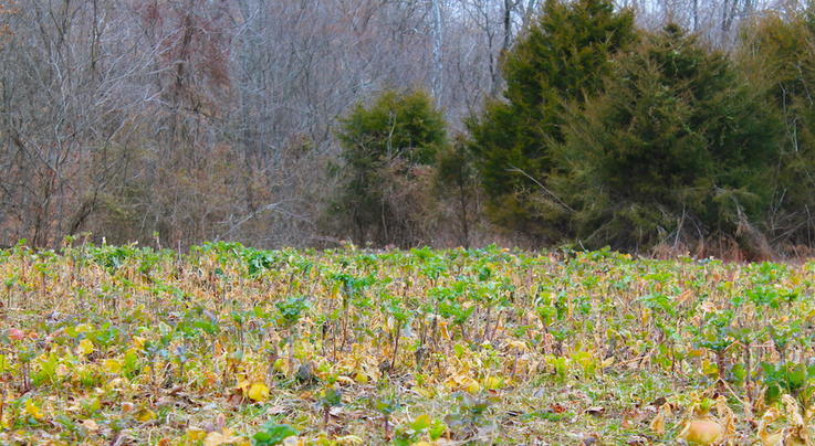 Prodigal Plots: How to Save Your Failed Food Plots Preview Image