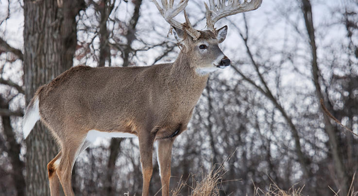 10 Things You Need to Know About Late-Season Deer Hunting Preview Image